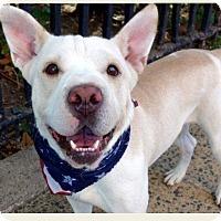 Adopt A Pet :: King - Raritan, NJ