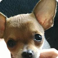 Adopt A Pet :: Tahiti - Meridian, ID