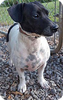 Dachshund Mix Dog for adoption in Foster, Rhode Island - Dolly