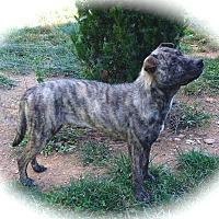 Adopt A Pet :: Cassie - Ijamsville, MD