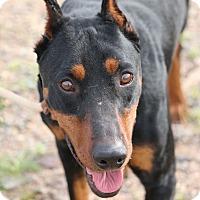 Adopt A Pet :: Milton - Fillmore, CA