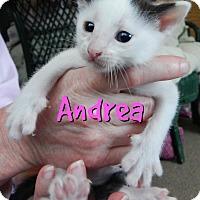 Adopt A Pet :: Andrea - Austintown, OH