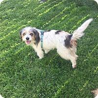 Adopt A Pet :: Dixie (ETAA) - Washington, DC