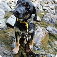 Adopt A Pet :: June Bug *Application Pending* - Winchester, VA