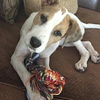 Adopt A Pet :: Penny - Matthews, NC