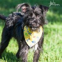 Adopt A Pet :: Juneau - Merriam, KS