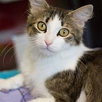 Adopt A Pet :: Yuma - Grayslake, IL