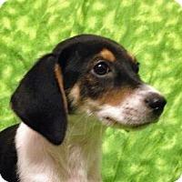 Adopt A Pet :: Jr. - Houston, TX