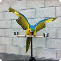 Adopt A Pet :: Sammy - Fountain Valley, CA