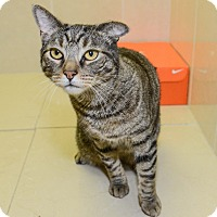 Adopt A Pet :: Jameson - New York, NY