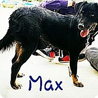 Adopt A Pet :: Max - Miami, FL