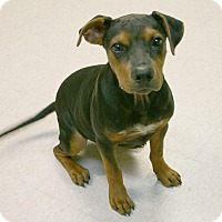Adopt A Pet :: Bongo - Lufkin, TX