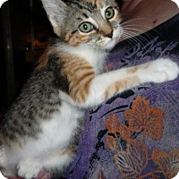 Adopt A Pet :: Mojave - Dallas, TX