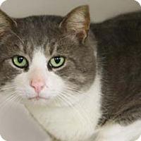 Adopt A Pet :: Benny - Merrifield, VA