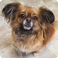 Adopt A Pet :: Sprout - Fennville, MI