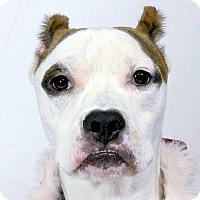 Adopt A Pet :: Chuckles - Orlando, FL