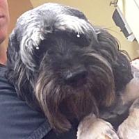 Adopt A Pet :: Winston - Santa Clarita, CA