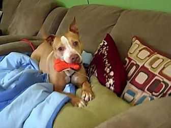 Pit Bull Terrier Mix Dog for adoption in Middletown, New York - Twiggy