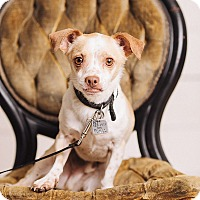 Adopt A Pet :: Buster - Portland, OR