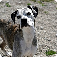 Adopt A Pet :: ROXIE - Port Clinton, OH
