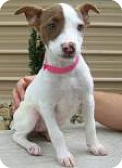 Terrier (Unknown Type, Medium) Mix Puppy for adoption in Madisonville, Tennessee - Yelena