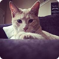 Adopt A Pet :: Mac - Savannah, GA