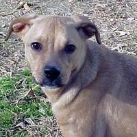 Adopt A Pet :: Tawny - Staley, NC