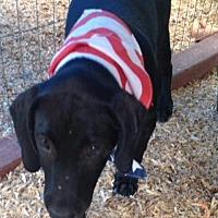 Adopt A Pet :: CARSON-ADOPTED - Marshfield, MA