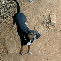 Adopt A Pet :: Duke - Rutledge, TN