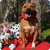 Adopt A Pet :: Buttercup - Burleson, TX