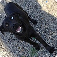 Adopt A Pet :: Rach - Lancaster, OH