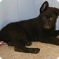 Adopt A Pet :: Spanky - Adopted! - Antioch, IL