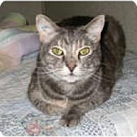 Adopt A Pet :: La - Shelton, WA