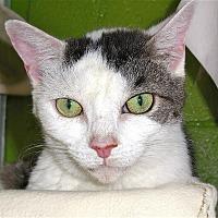 Adopt A Pet :: Calvina - Carmel, NY
