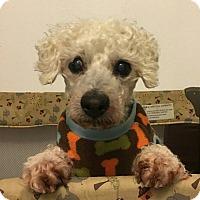 Adopt A Pet :: Henry - Sheridan, OR