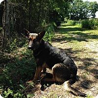 Adopt A Pet :: Bella - Dacula, GA