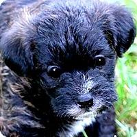 Adopt A Pet :: COOPER(ADORABLE