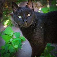 Adopt A Pet :: Ember - Corinne, UT