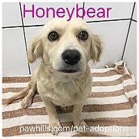 Adopt A Pet :: Honeybear - Agoura Hills, CA