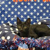 Adopt A Pet :: A080868 - Grovetown, GA
