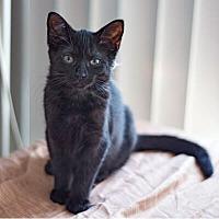 Adopt A Pet :: Marli - Mississauga, Ontario, ON