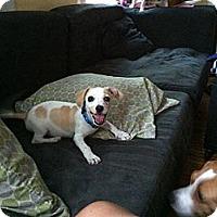 Adopt A Pet :: Peanut - Minneapolis, MN