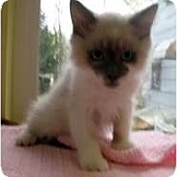 Adopt A Pet :: Moe - Shelton, WA