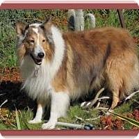 Adopt A Pet :: Diego - Trabuco Canyon, CA