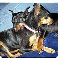 Adopt A Pet :: Angel and Will - Phoenix, AZ