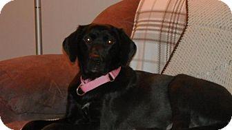 Labrador Retriever Mix Dog for adoption in Saskatoon, Saskatchewan - Noelle