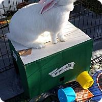 Adopt A Pet :: Hermione - Williston, FL