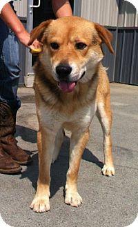 German Shepherd Dog Mix Dog for adoption in Greenville, Kentucky - Punk