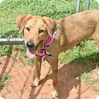Adopt A Pet :: Della - Ormond Beach, FL