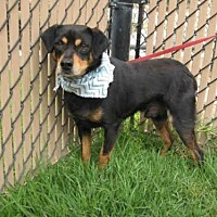Adopt A Pet :: *SCOOBY - Norco, CA